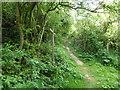 TQ5101 : Junction of Footpath and Rathfinny Trail by PAUL FARMER