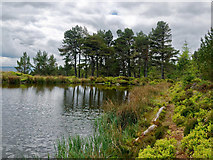 NH6170 : Lochan on the side of Cnoc Fyrish by Julian Paren