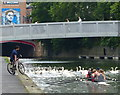 SK5804 : Rowers and swans on the Grand Union Canal in Leicester by Mat Fascione