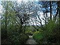 SD6313 : Terraced Gardens at Rivington by Carroll Pierce