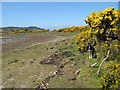 NM6468 : Gorse in the bay by Jonathan Wilkins