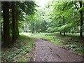 SO7277 : Woodland track, Sturt Common by Philip Halling
