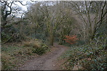 SX4961 : In Widewell Wood by N Chadwick
