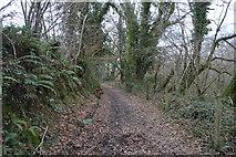 SX4861 : Footpath, Langley Plantation by N Chadwick