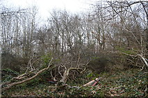 SX4760 : Trees by Southway Lane by N Chadwick