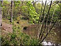 TQ8020 : The Horse Pond in Brede High Woods in spring by Patrick Roper