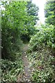 ST6172 : Recently mown path by DS Pugh