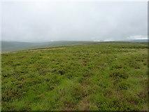 SH9421 : Along the 'ridge' of Bryn Mawr by Richard Law