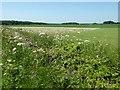 SP2007 : Farmland near Eastleach Downs Farm by Philip Halling