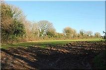 SX0780 : Field near Tregreenwell by Derek Harper