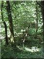 SW7025 : Woodland near Mawgan by JThomas