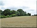 SU9294 : Wheat field by Robin Webster
