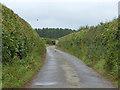 SU9496 : Cherry Lane by Robin Webster