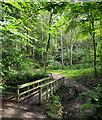 NZ0417 : Woodland glade beyond footbridge : Week 31