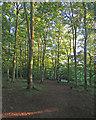 TL4854 : Evening sunlight in The Beechwoods by John Sutton