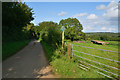 SY5296 : West Dorset : Country Lane by Lewis Clarke
