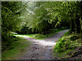 SN6650 : Forestry road junction south-west of Llyn y Gwaith in Ceredigion by Roger  Kidd