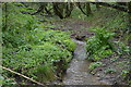 SX4762 : Gushing Devon stream by N Chadwick