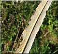 TG3203 : Rust on willow leaf  (Salix alba) by Evelyn Simak