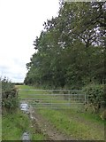 SX5597 : Muddy gateway by woodland south of Westacombe by David Smith