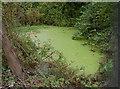 ST6167 : Sleep Lane pond by Neil Owen