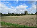 TL4654 : Near the edge of Cambridge by John Sutton