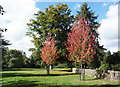 TQ0182 : Autumn Leaves, Langley Country Park by Des Blenkinsopp