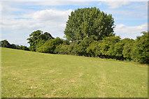 SU8695 : Footpath to Church Farm by N Chadwick