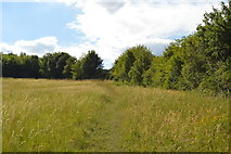 SU8696 : Grassy footpath by N Chadwick