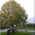 SJ5975 : Triangle and tree, Acton Bridge by Richard Webb