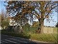 TL2119 : Horse chestnut tree on the B656 by David Howard