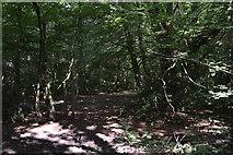 SU8496 : Naphill Common by N Chadwick
