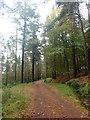 J3729 : Forestry road in Donard Wood between Craignagore Bridge and Amy's River Bridge by Eric Jones