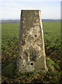 ST6066 : The less glamourous life of a trig point by Neil Owen