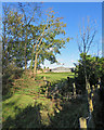 TL4848 : Sawston: a glimpse of Huntingdon Farm by John Sutton