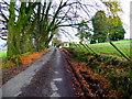 H5270 : Bencran Road by Kenneth  Allen
