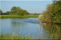 SP4710 : Openwater swimmers, River Thames by N Chadwick
