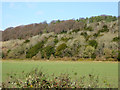 SU8195 : Wooded ridge north of West Wycombe by Robin Webster