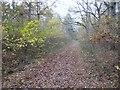 TF0821 : Track in Bourne Wood by Alex McGregor