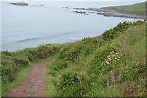 SX4948 : South West Coast Path by N Chadwick