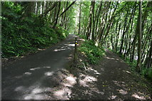 SX4449 : Footpath junction, South West Coast Path by N Chadwick
