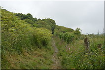 SX4950 : South West Coast Path out of Bovisand Bay by N Chadwick