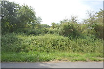SP4510 : Hedge by the A40 by N Chadwick