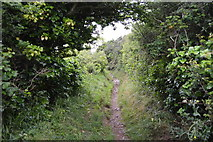 SX4850 : South West Coast path by N Chadwick