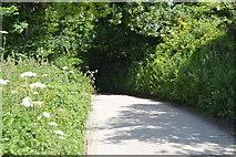SX4249 : Lane in Rame by N Chadwick