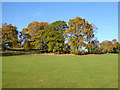 TM1542 : Trees, Bourne Park, Ipswich by Robin Webster