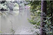 TQ3230 : Ardingly Reservoir by N Chadwick