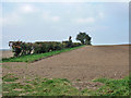 TL6048 : Hedgerow north of Webb's Road by Robin Webster