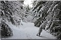NT2438 : Snow in Cademuir Forest by Jim Barton