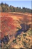 NO6484 : Glen Dye by Anne Burgess